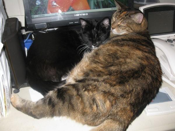 Abby and Hetty